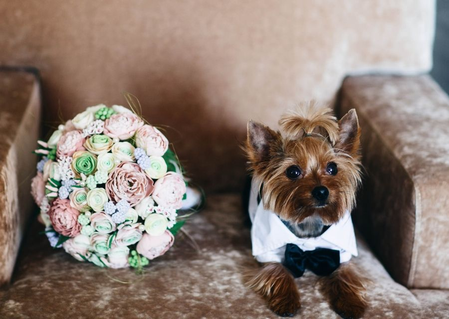 Adopt a Pet Instead of Getting an Engagement Ring